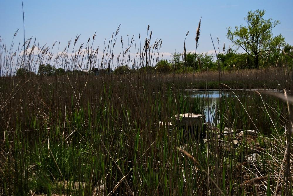 Belle Isle Marsh Reservation (6/6)