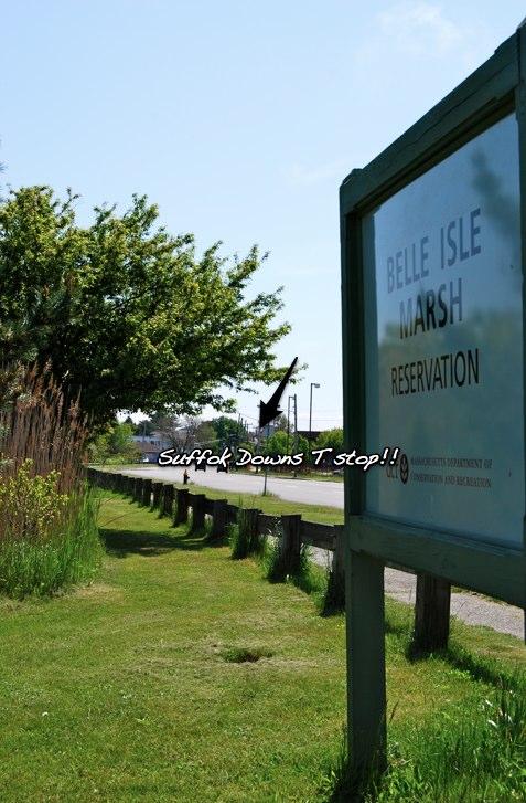 Belle Isle Marsh Reservation (2/6)