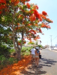 The trees and plants were flowering all over the islands!