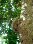 Another tiny monkey!