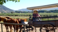 We took a horse drawn carriage ride through the vineyard.