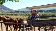 We took a horse drawn carriage ride through the vineyard.